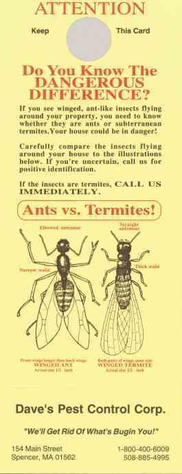 8215 Ants Vs. Termite Doorhanger