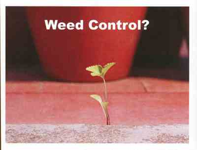 3538 Weed Control?
