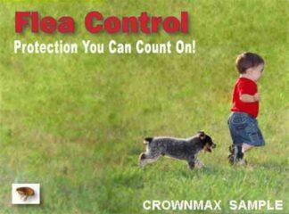 2605 Flea Control - Boy & Dog