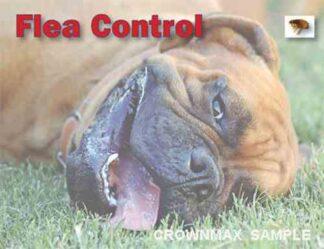 2604 Flea Control - Boxer