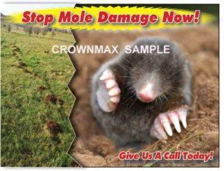 2526 Stop Mole Damage Now!