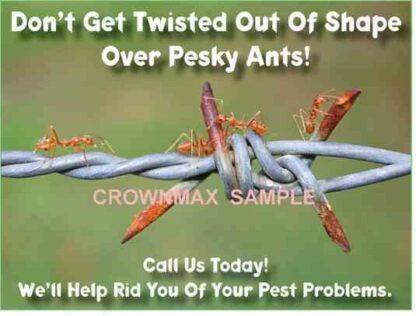 2521 Pesky Ants!