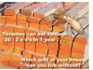 2305 2 x 4 Termite Postcard