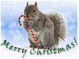 1230 Merry Christmas - Squirrel w/candy cane