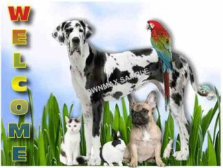 1101 Welcome Postcard - Small Animals