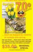 8251 Spring & Swarmers
