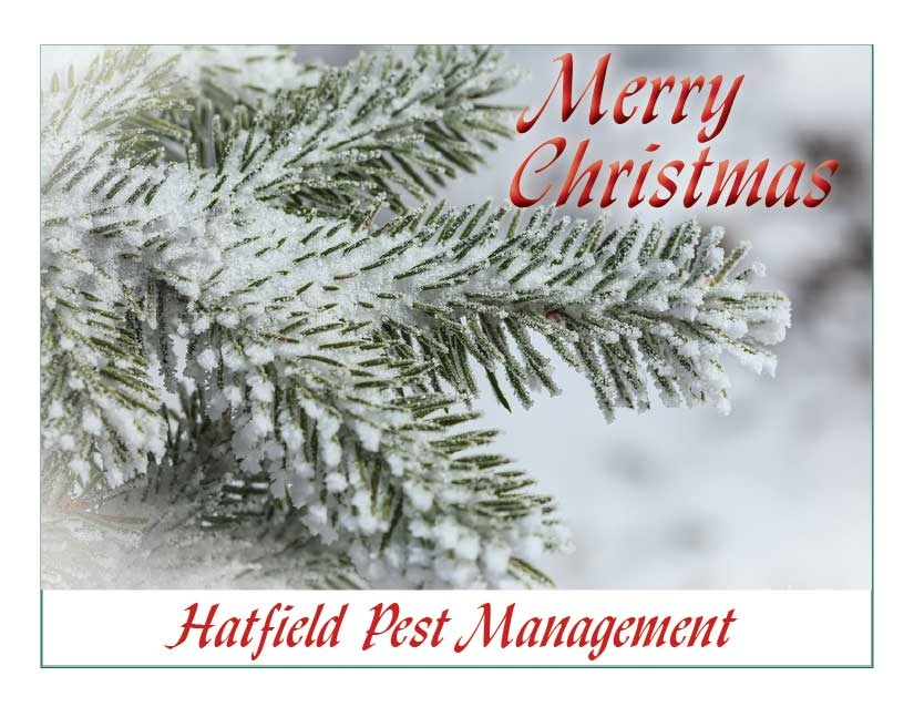 1285 - Merry Christmas - Personalized Christmas Cards - Crownmax.com